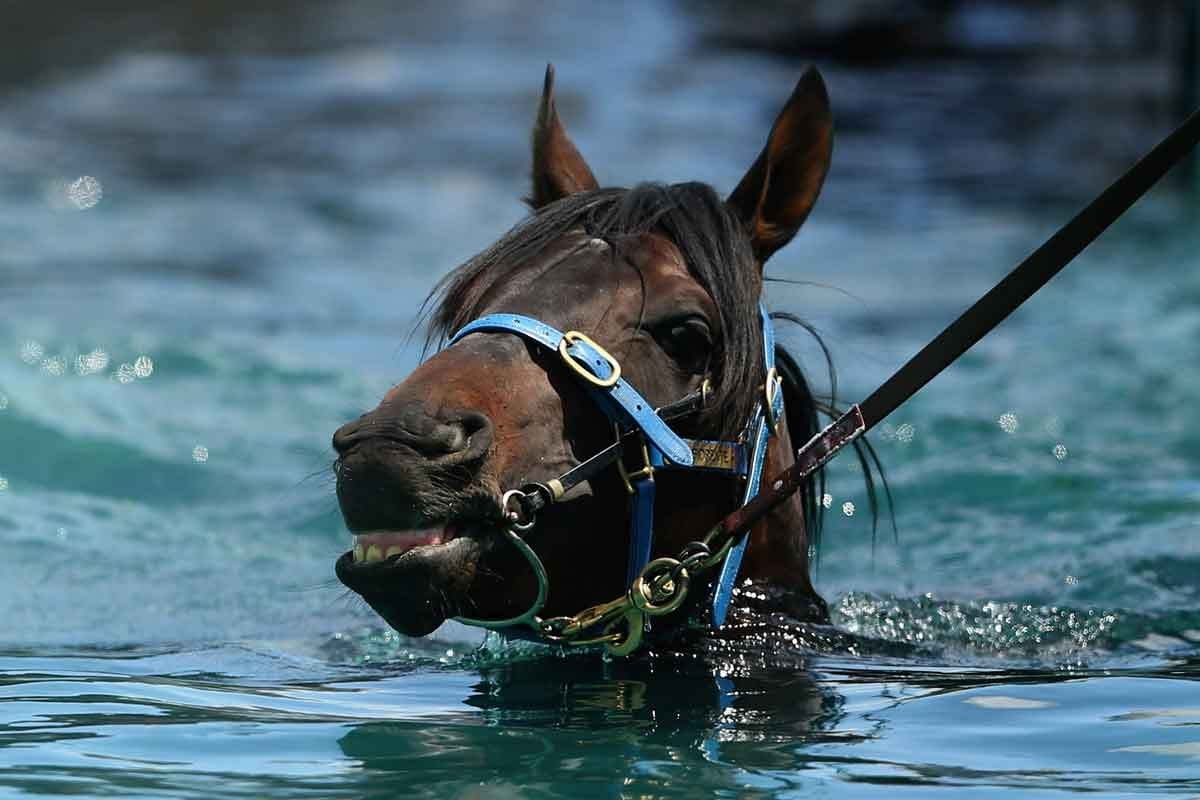 Fiorente takes a dip after trackwork at Flemington.