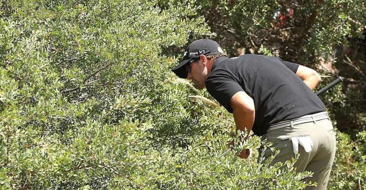 Yes, that's Adam Scott looking for his ball in the ti-tree.