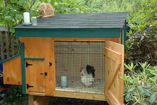 chickens-coop