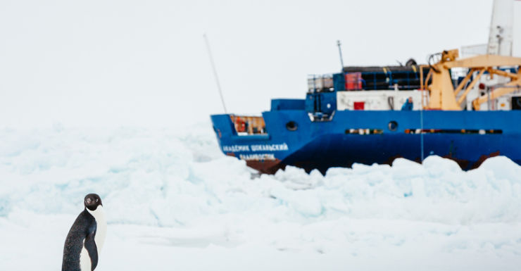 A cruise ship wedged in sea ice