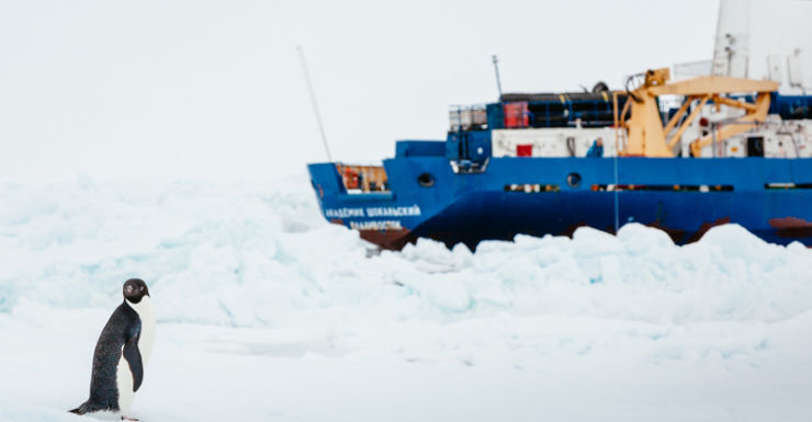 A penguin in front of the Russian ship stuck in the Antarctic