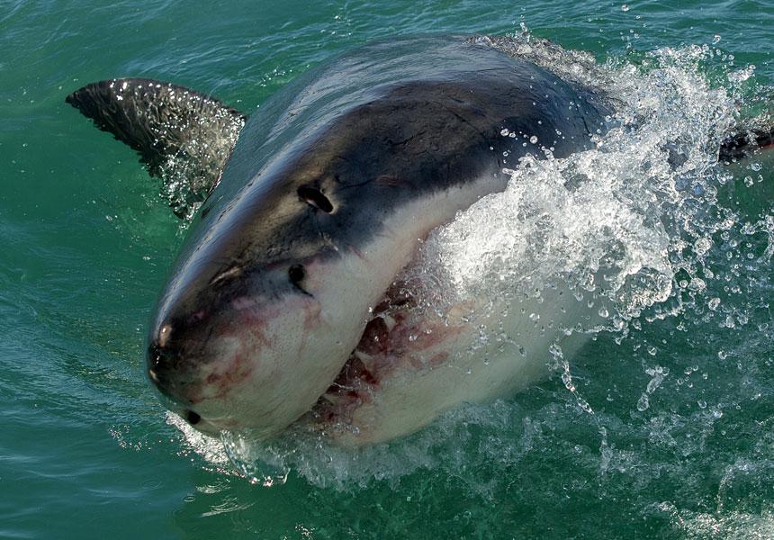 shark attack yeppoon