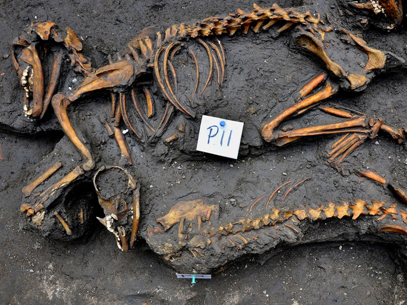 Canine skeletons unearthed by investigators in Mexico City.