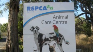 Last year a parliamentary committee described the RSCPA's management processes as dysfunctional.