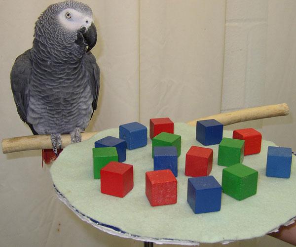 Alex-parrot-embed