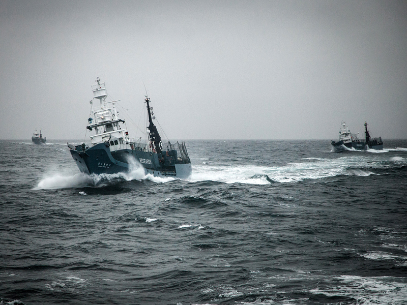 File photo of Japanese whaling ships in the Southern Ocean