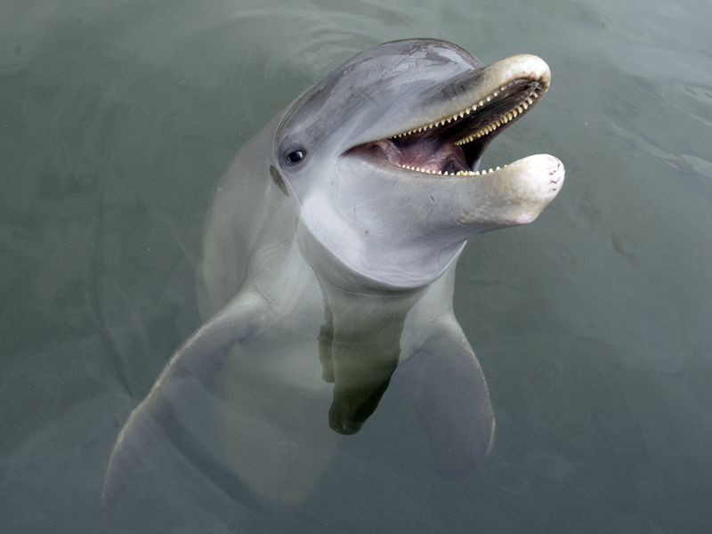 File photo of a dolphin