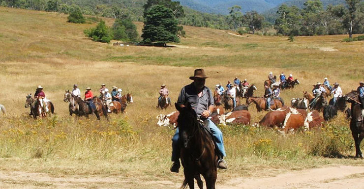 File photo of cattle grazing in Victoria's high country.