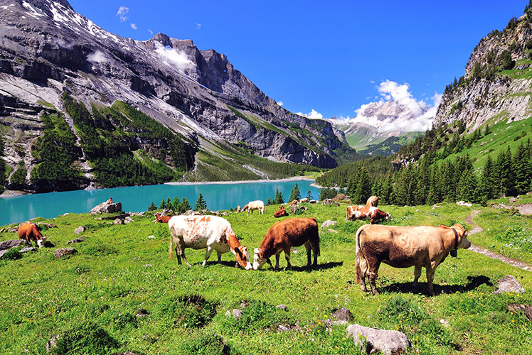 Switzerland is famous for cuckoo clocks, chocolate ... and bank accounts. Source: ShutterStock.