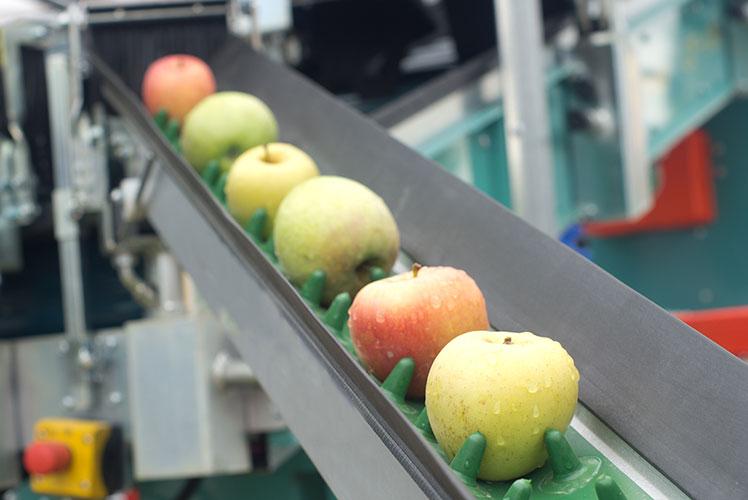 mon_shutterstock_190314_apples