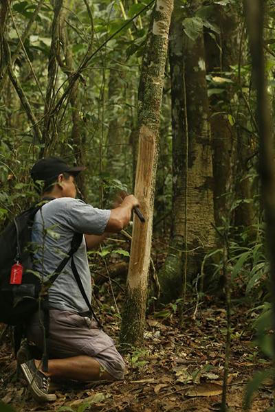 Alejandro shaves some medicinal tree bark.