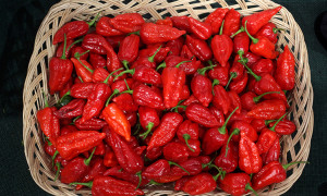 Blast out the flu with some fiery chilli.