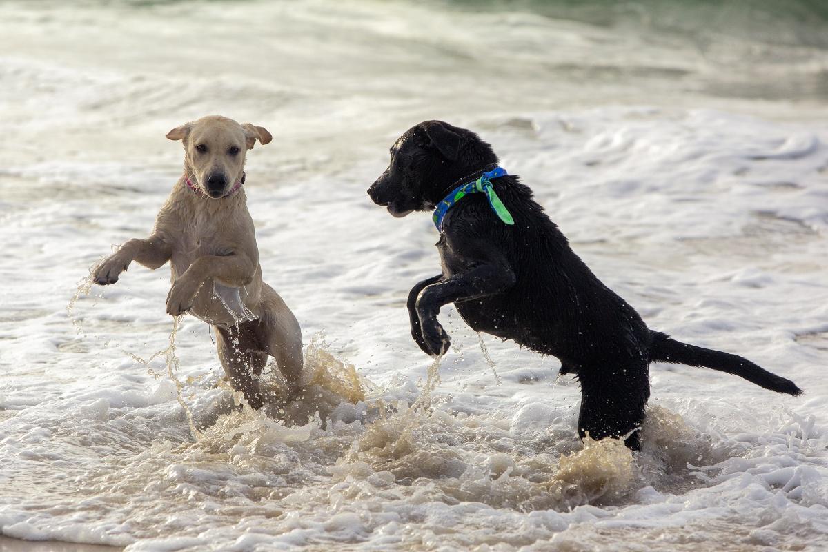 Animal rescue by Amanda Whelan