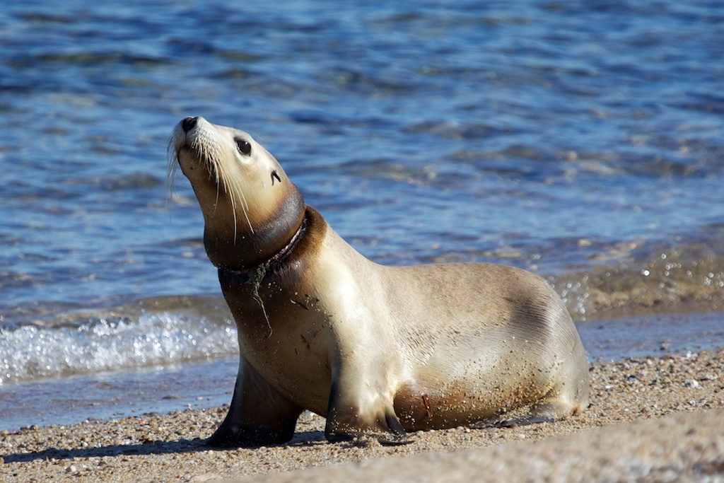 Sea lion image by Fran Solly