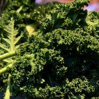 Kale. Source: AAP.