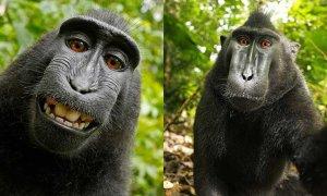 Macaque-self-portrait
