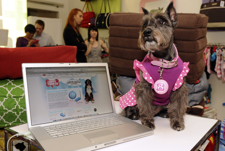 Our pets will be web savvy. Source: AAP.