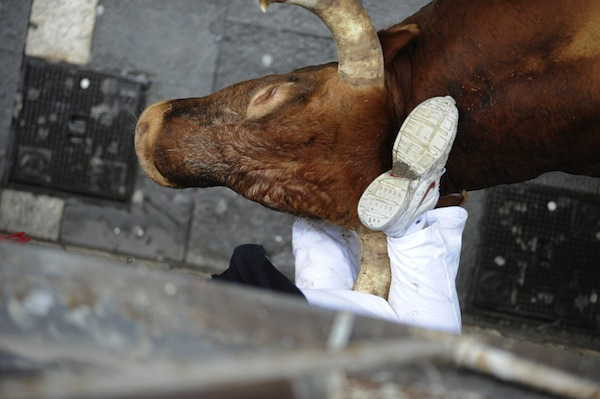 A runner is gored by the Miura bull during the last bull run of the San Fermin Festival on July 14.