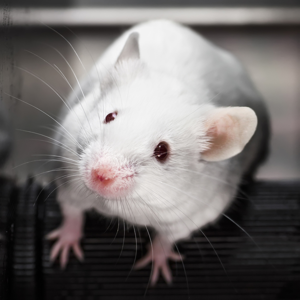 mouse-051114-newdaily