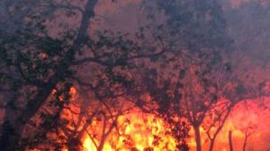 Poor planning puts homes at risk to bushfire and flooding, according to a CSIRO draft paper.