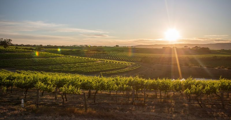 South Australia wine region