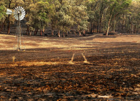 A burnt paddock in Humbug Scrub in the Adelaide Hills.