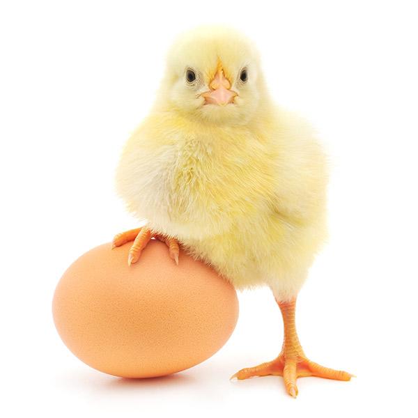 Ethical-Eggs