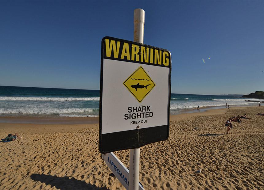 Shark-Attack-NSW