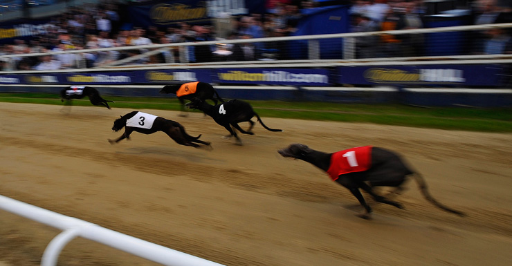 greyhound racing Getty
