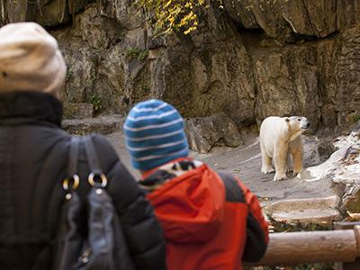 polar-bear-200215-newdaily