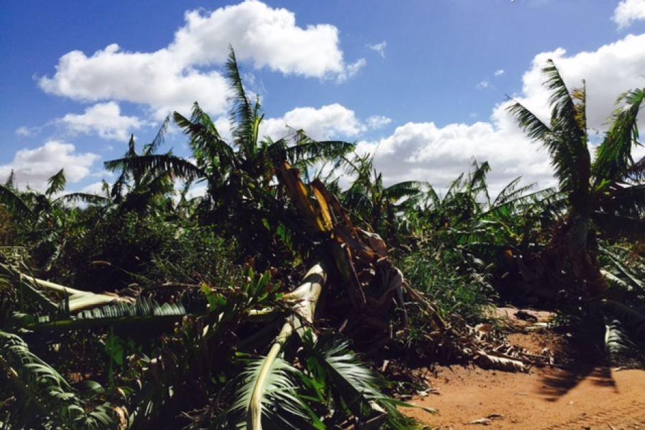 Cyclone Olwyn has destroyed banana plantations and crops.