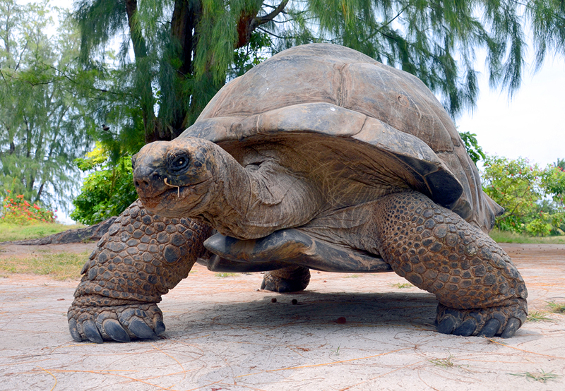 Slow and steady wins the race. Photo: Shutterstock