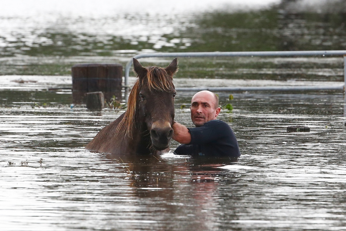 Steve Spowart tries to help a horse stranded in barbed wire in near Dungog.