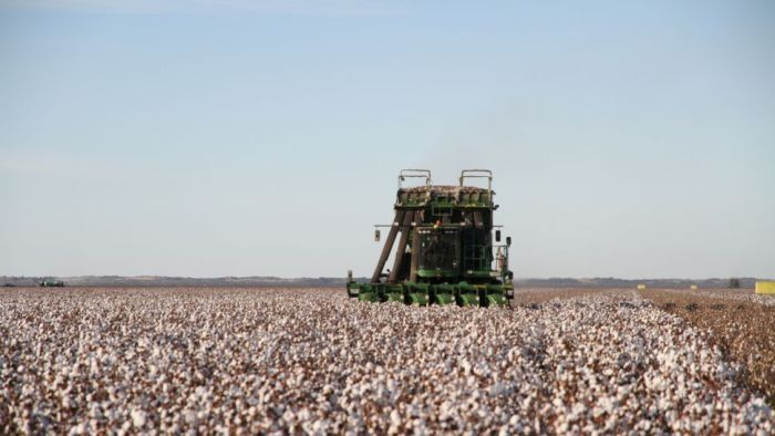 china trade australia cotton