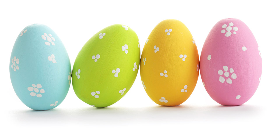 eggs-020415-newdaily