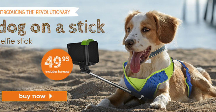 april fools day dog selfie stick