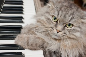 cats classical music