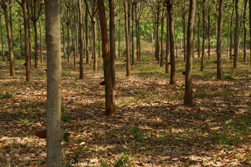 Planting and protecting forests is a major part of 'carbon abatement'.Shutterstock