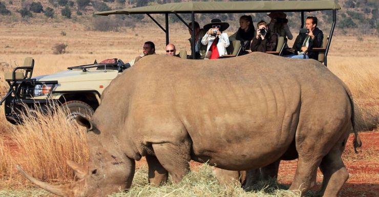 In just the first four months of 2015, a new rhino poaching record has been made in South Africa.