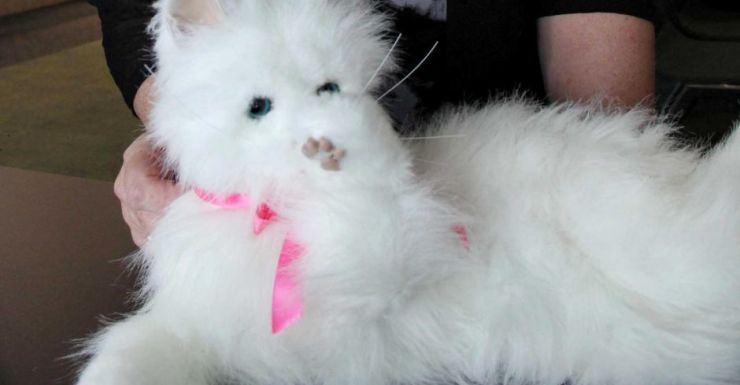 Robot cats have been used to help reduce agitation for people with dementia.