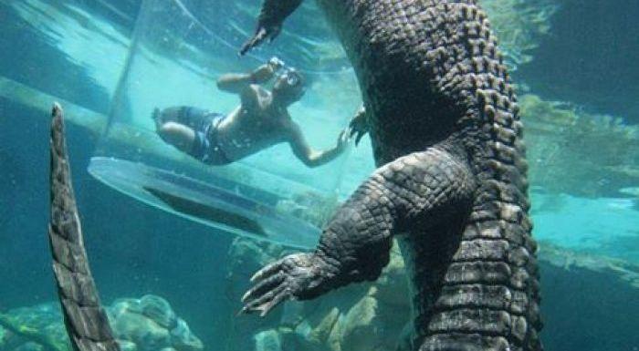 The 'Cage Of Death' submersible enclosure at Crocosaurus Cove.