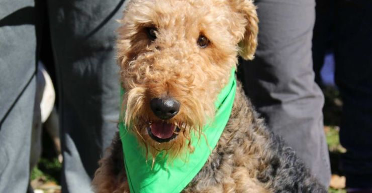 Dogs were wearing bandannas for the world record attempt in Canberra.