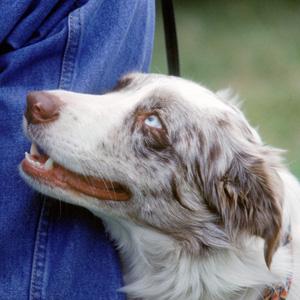 dog-gaze