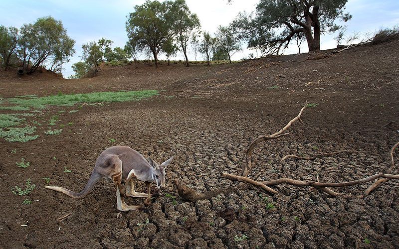 drought-qld