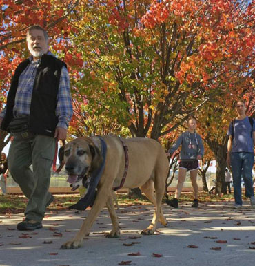 More than 1,000 dog owners enjoyed a walk around Lake Burley Griffin in Canberra for the RSPCA's Million Paws Walk.