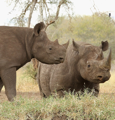 Rhino horn remains valuable and in demand.