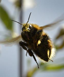 bee-getty