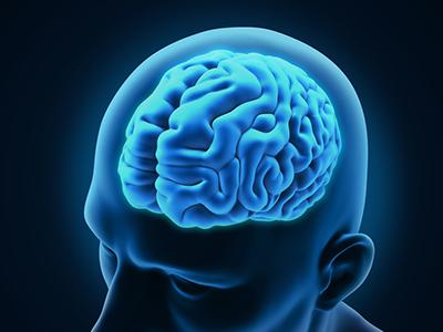 brain-300615-newdaily