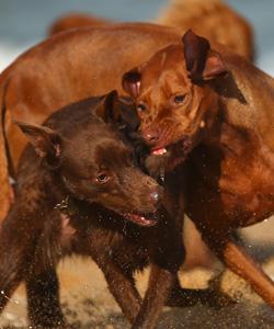 dog-getty