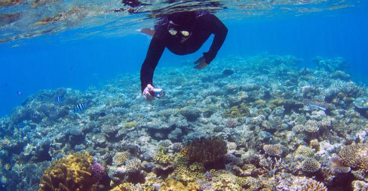 Diver dies at Barrier Reef